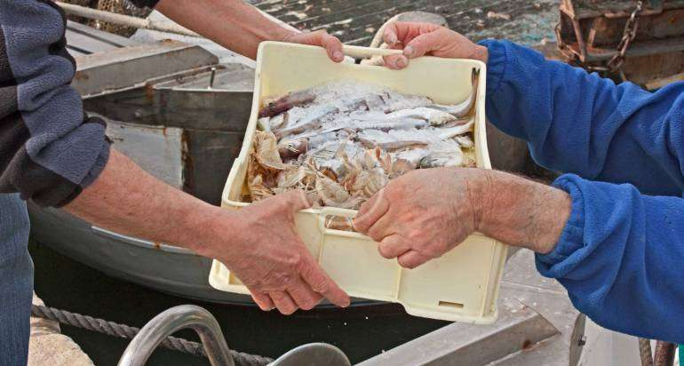 Seafood Industry